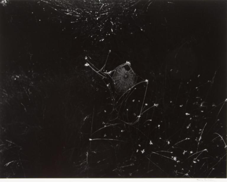 "Aix-en-Provence, France (#119 from """"Photographs Harry Callahan"""")"